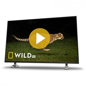 Nat Geo Wild HD ab sofort verfügbar